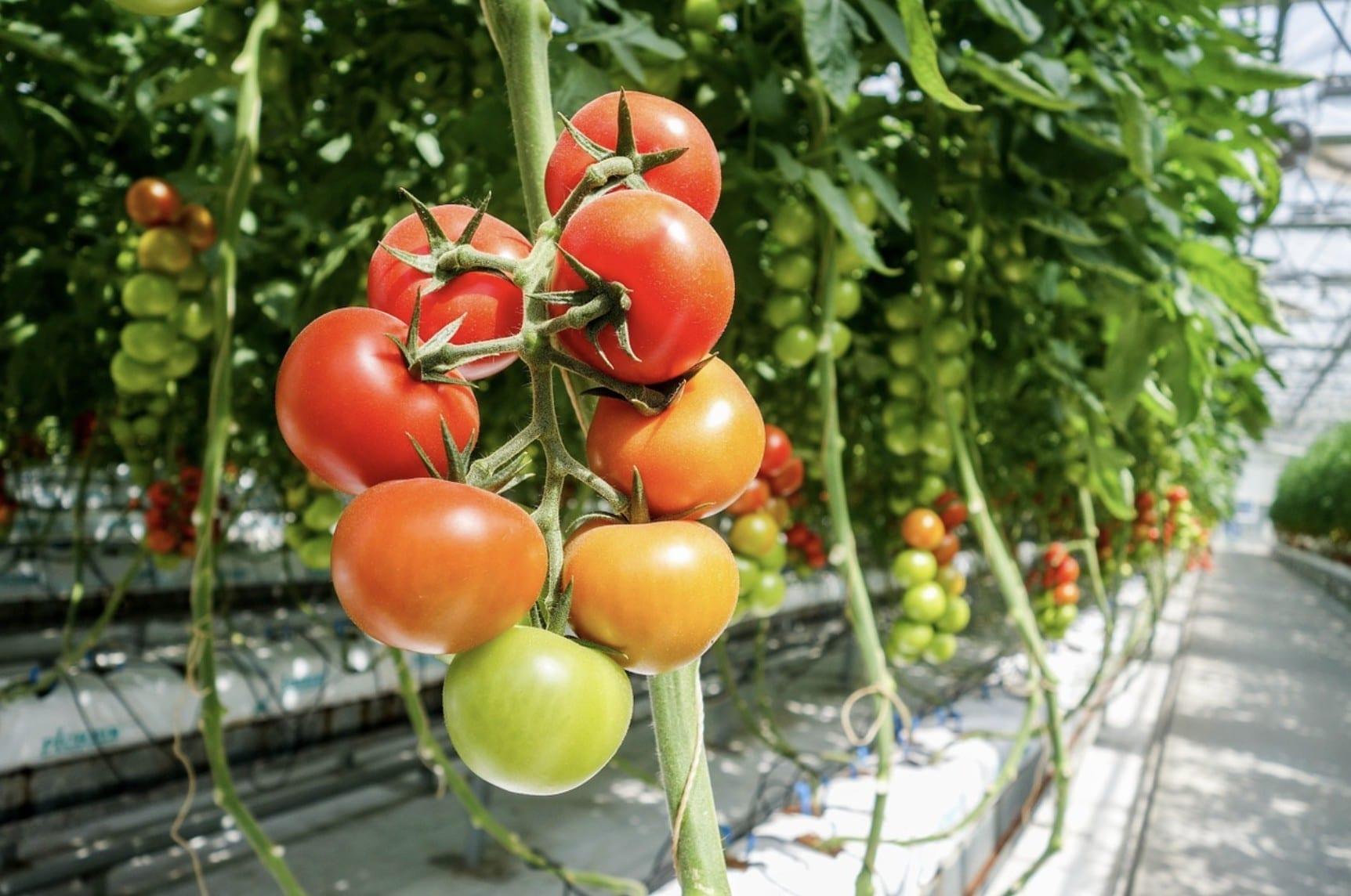 Nachhaltig leben und Gemüse selbst anpflanzen