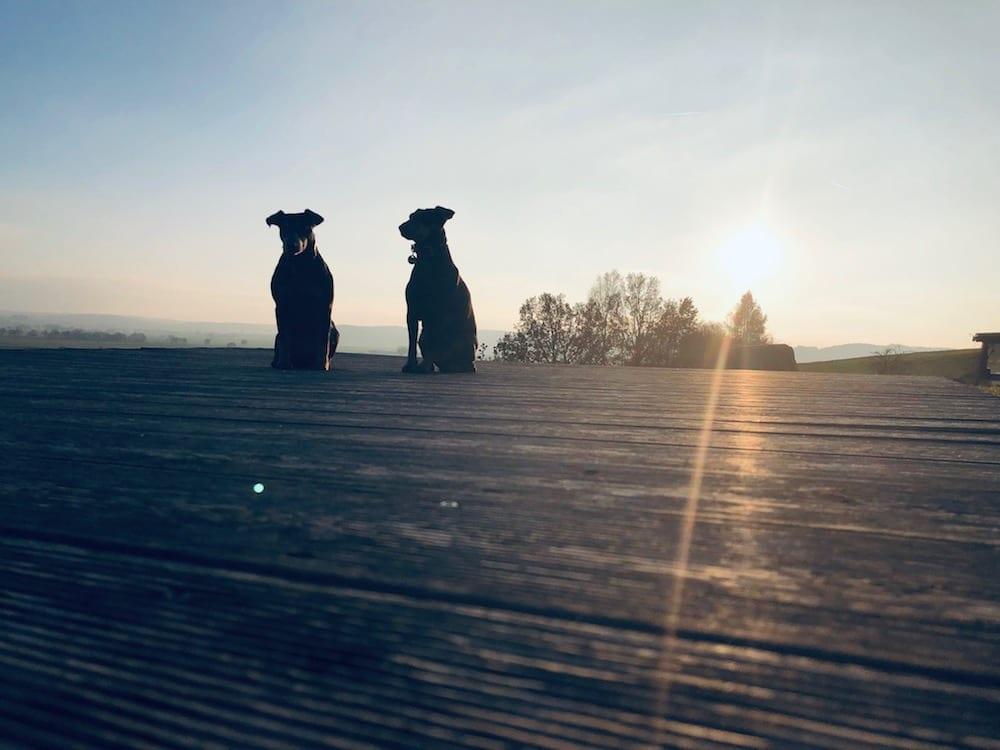 Hund - Kneippurlaub mit Hund