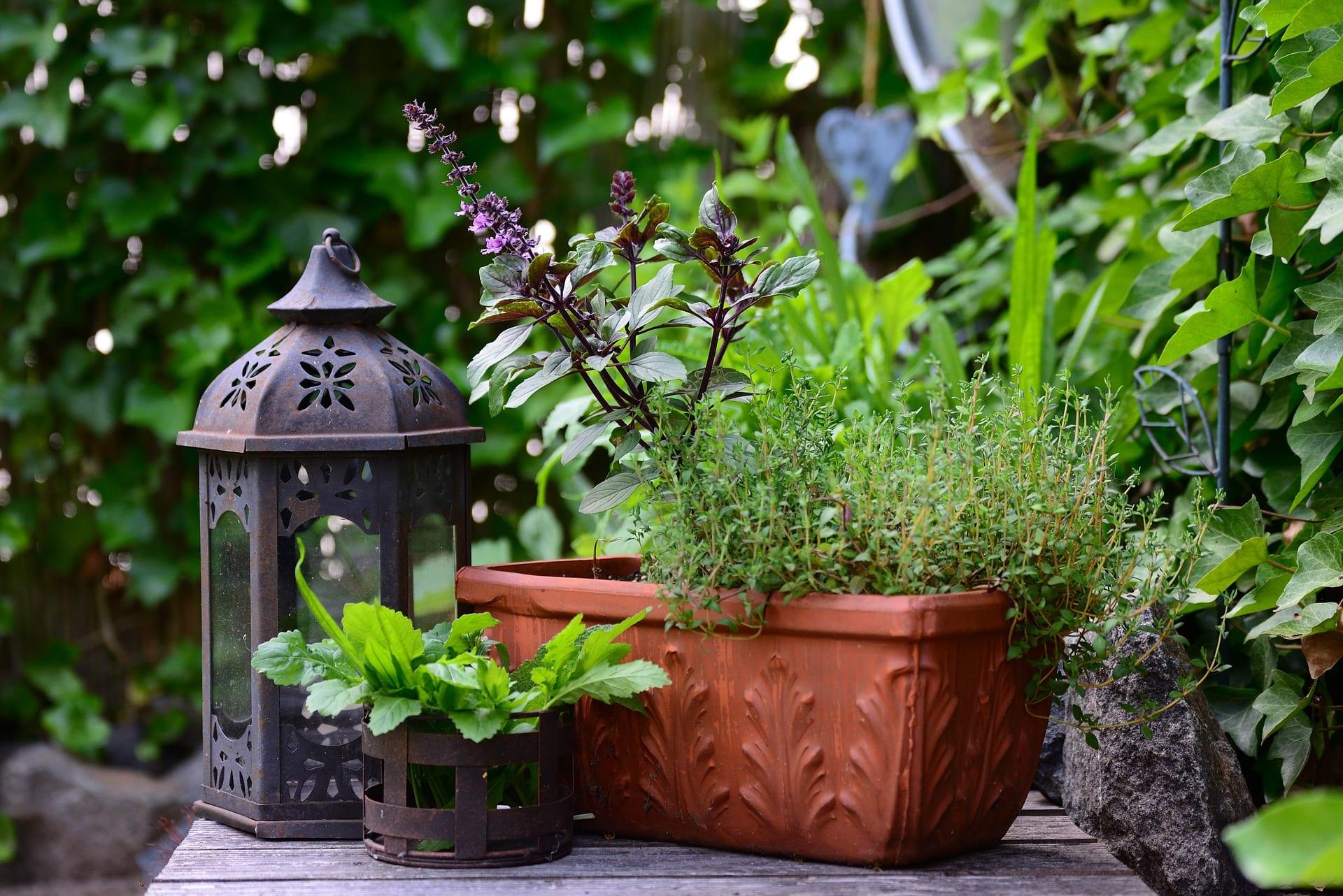 Kneipp-Kräuterapotheke für den Balkon | Heilkräuter & gesunde Ernährung im Blog von Kneipp Premium Class