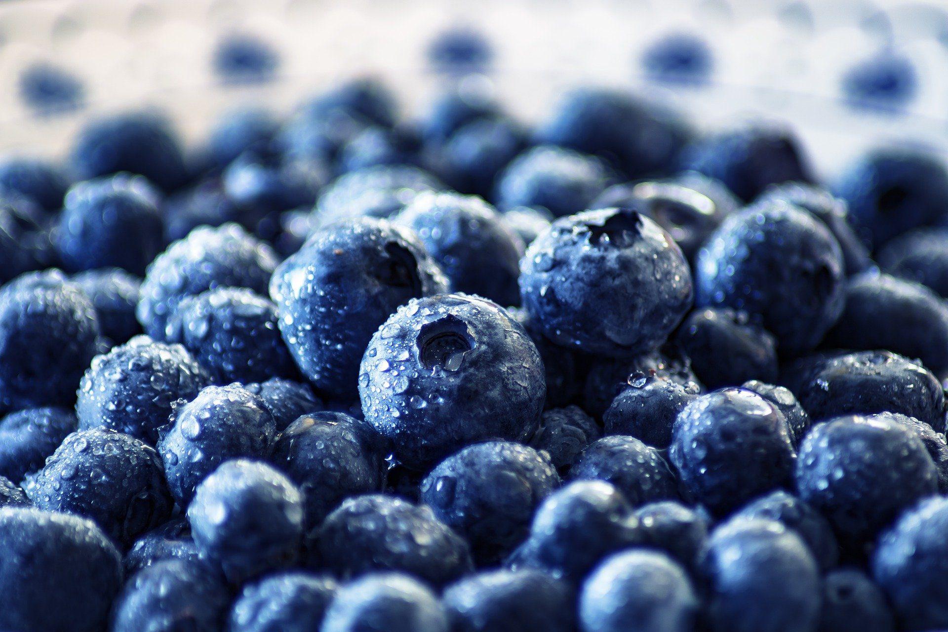 Superfood Beeren Blaubeeren